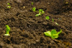 Soil agriculture